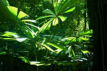 Rainforest Photo by ben britten via Flickr CC