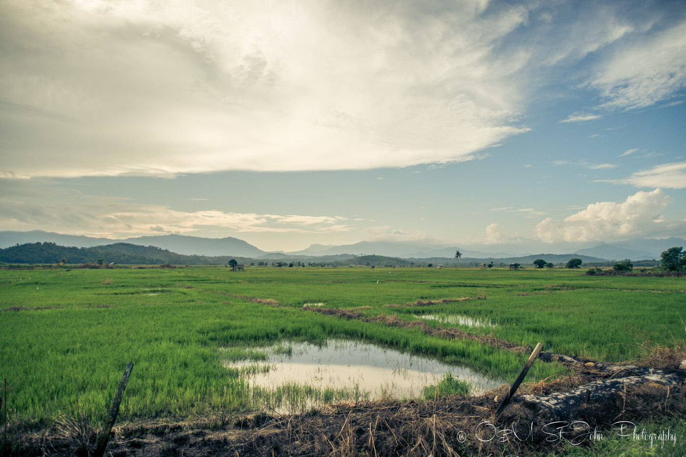 Kota Belud Malaysia  City pictures : Rice paddies just outside of Kota Belud, Sabah, Malaysia