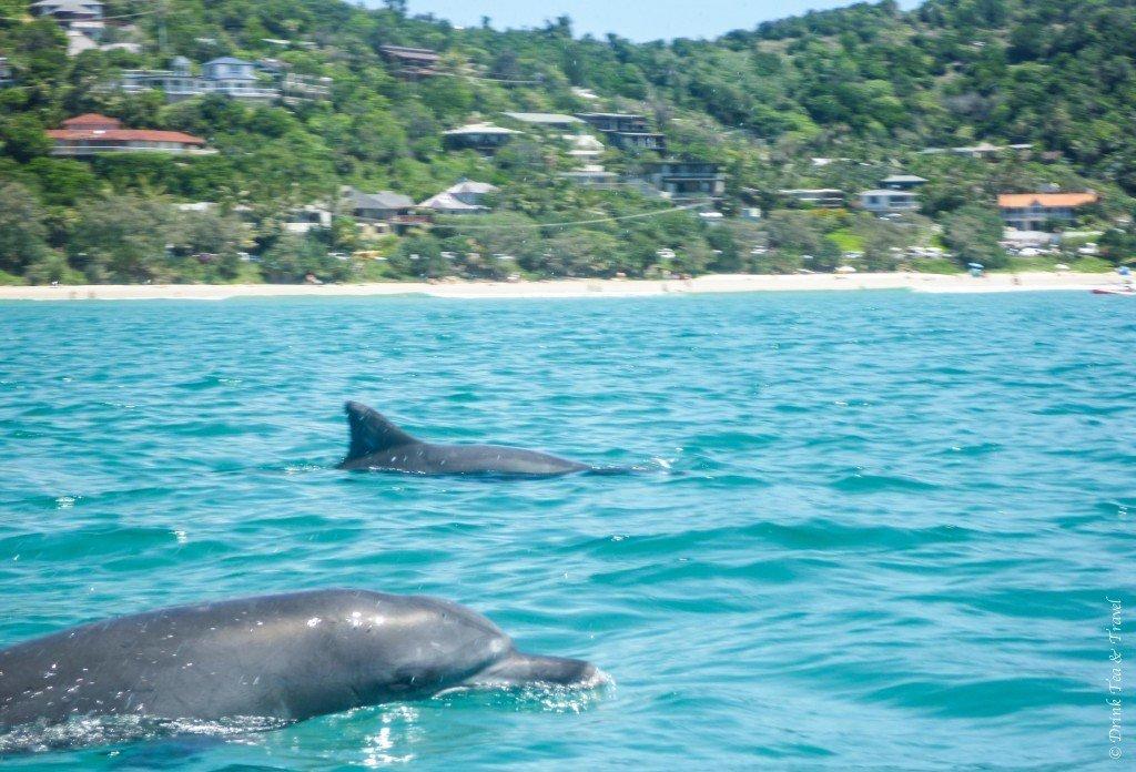 Dolphins in Byron Bay, Australia