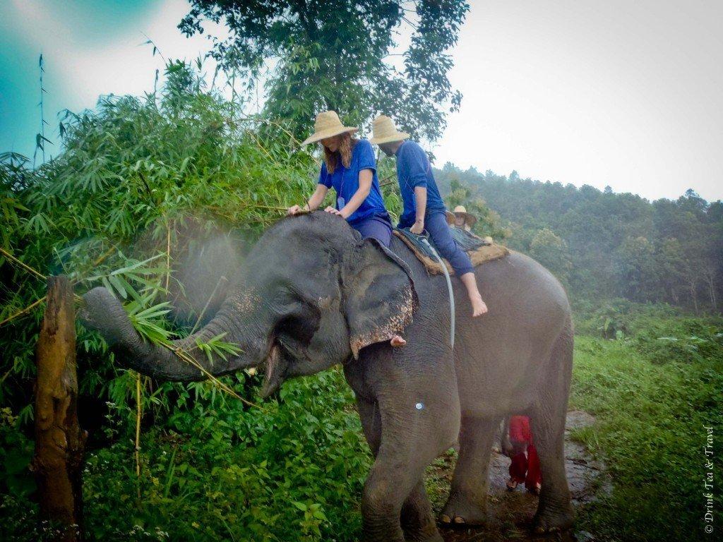 Elephant Camp, Chiang Mai, Thailand